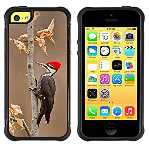 Suave TPU Caso Carcasa de Caucho Funda para Apple Iphone 5C / woodpecker red beak autumn winter / STRONG