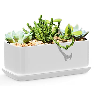 Succulents Choice 10 inch Rectangular White Ceramic Succulent Planter: Modern Design Pot Includes Fitted Saucer With Drain Holes : Garden & Outdoor
