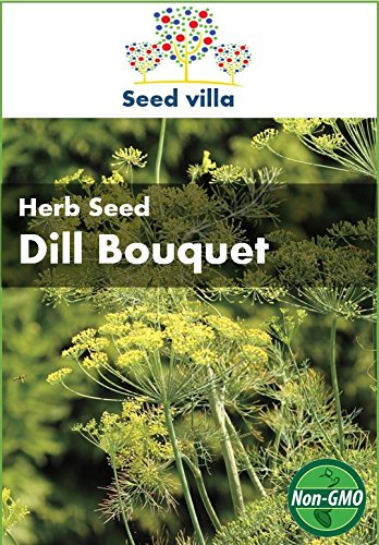 Seed Villa Dill Bouquet Herb Seed - Approx. 900 Seeds - Herb Heirloom Vegetable (Bouquet Dill Seeds)