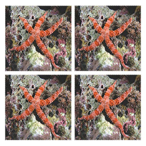 IDO Heat Resistant Placemats for Kitchen Table Mats for Dinning Room,Sea Star On Pinterest Washable Insulation Non Slip Placemat 12x12 inch Set of 4 -