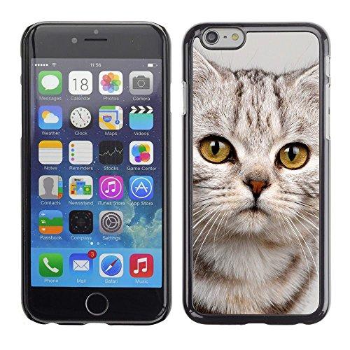 GooooStore/Housse Etui Cas Coque - Cute Sad Kitten Cat Kitty Furry Beige - Apple iPhone 6