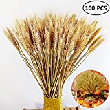 Natural Wheat Dried Sheave Bundle Thanksgiving Decorative Flower Branch Centerpieces Decorative for Kitchen Table Wedding Party
