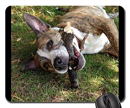 Mouse Pads - Happy Dog Staffy Staffordshire Bull Terrier Dog Walk