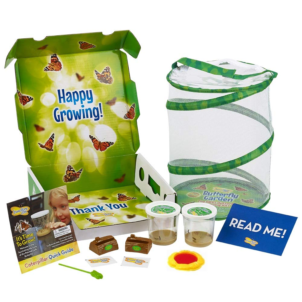 Insect Lore Live Butterfly Garden Kit with Two Cups of Caterpillars by Insect Lore
