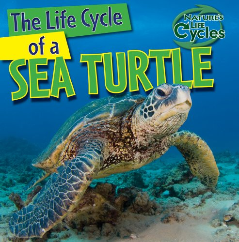 The Life Cycle of a Sea Turtle