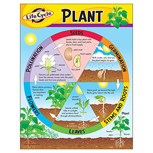 Trend Enterprises Inc. Life Cycle of a Plant Learning Chart, 17