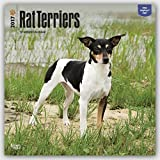 Rat Terriers 2017 Square (Multilingual Edition)