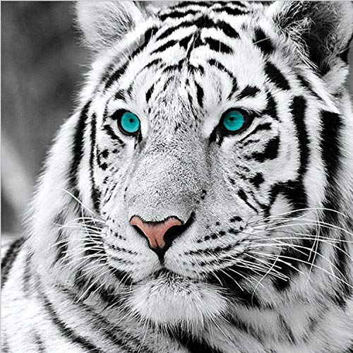 - ANMUXI 5D Diamond Painting Kits Full Square Drills 35X35CM White Tiger Animals Paint with Diamonds Art for Stress-Relief & Home Decor