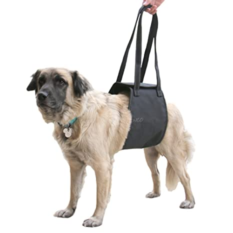 Amazon.com : Max and Neo Dog Lift Support and Rehab Harness for Dogs