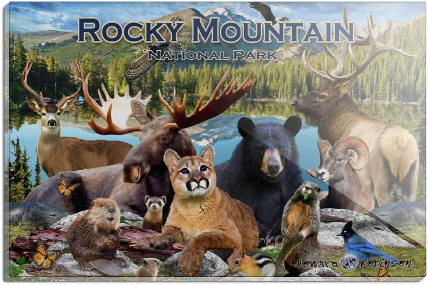 Rocky Mountain National Park Animals Button Refrigerator Magnet