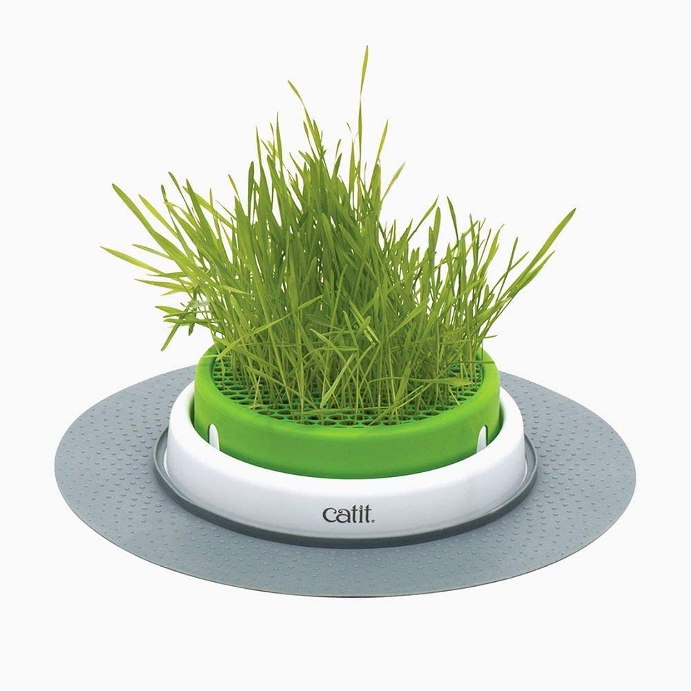 Amazon Com Catit Senses 2 0 Cat Grass Planter Interactive Cat Toys Sporting Goods Pet Supplies