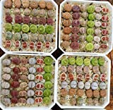 Micro Landscape Design Rare Authentic Lithops Seed Kit/Pack of 25 Seeds Plus Live Seedlings and Germination Kit/Guarantee Excellent Germination Rate (Pack 25 + 3 Live Seedlings + Germination Kit)