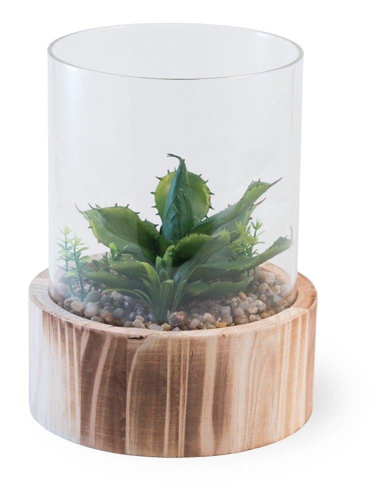 Amazon Com Boston International Decorative Terrarium Cactus Home