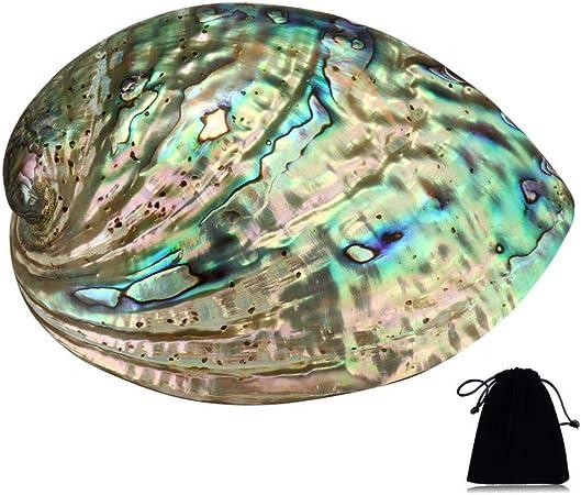 Plusieurs Trous Maculage D/écoratif Accessoire F/ête Mariage Maison D/écoration 90 mm x 120 mm x 39 mm Trou Environ 3 mm-9 mm Coquillage Grand Ormeau