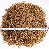 5 Lbs Dried Mealworms for Wild Bird Chicken Fish by Heman Mealworms