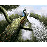 Diy Oil Painting by Numbers, Paint by Number Kits PBN Kit for Adults Girls Kids Christmas New Year Decorations Gifts - Peacock Couple
