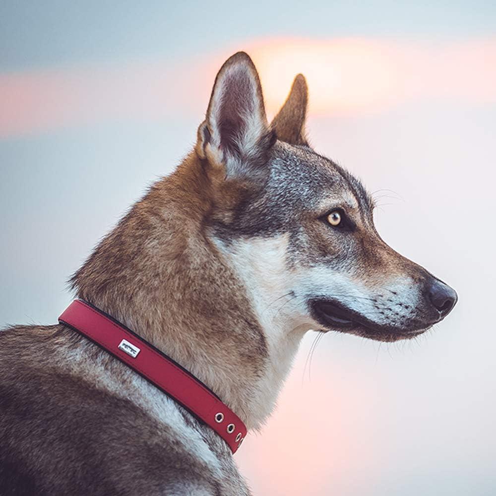 PetTec Collar de Perro