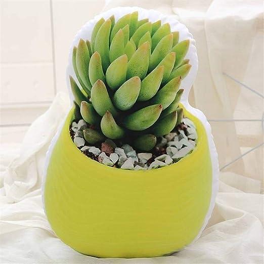 La nueva almohadilla plantas de cactus suculento de felpa ...