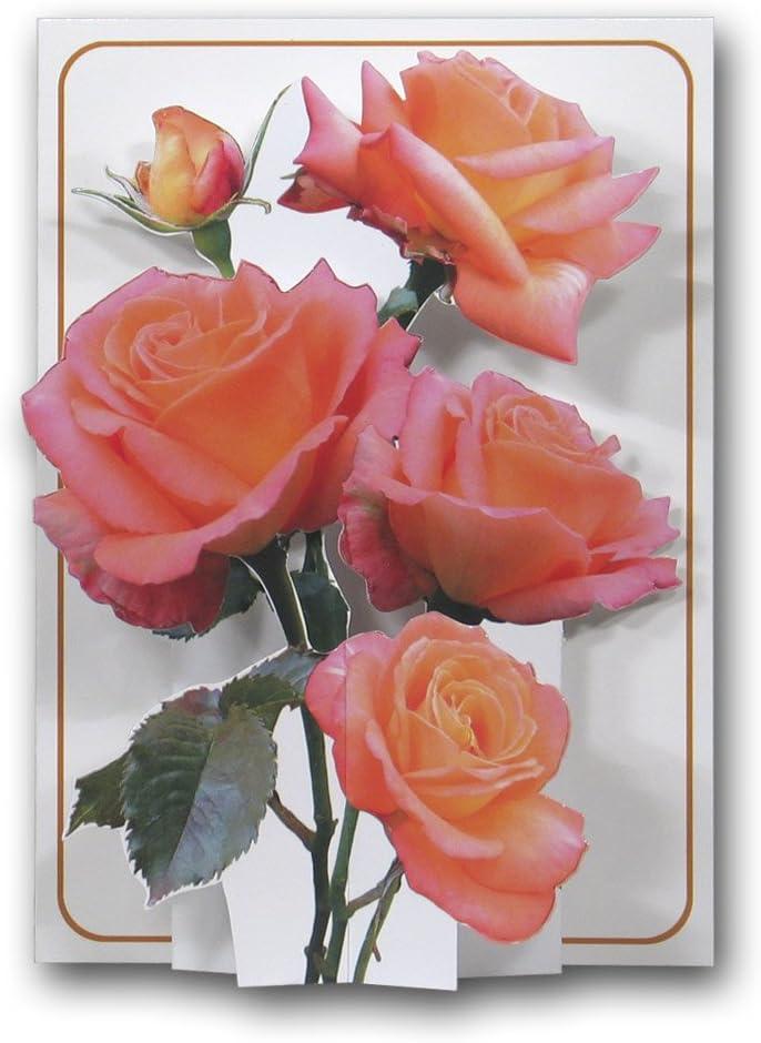Rose roses/ /Une carte de v/œux 3d Pop Up /à partir de la Presse Pictoria
