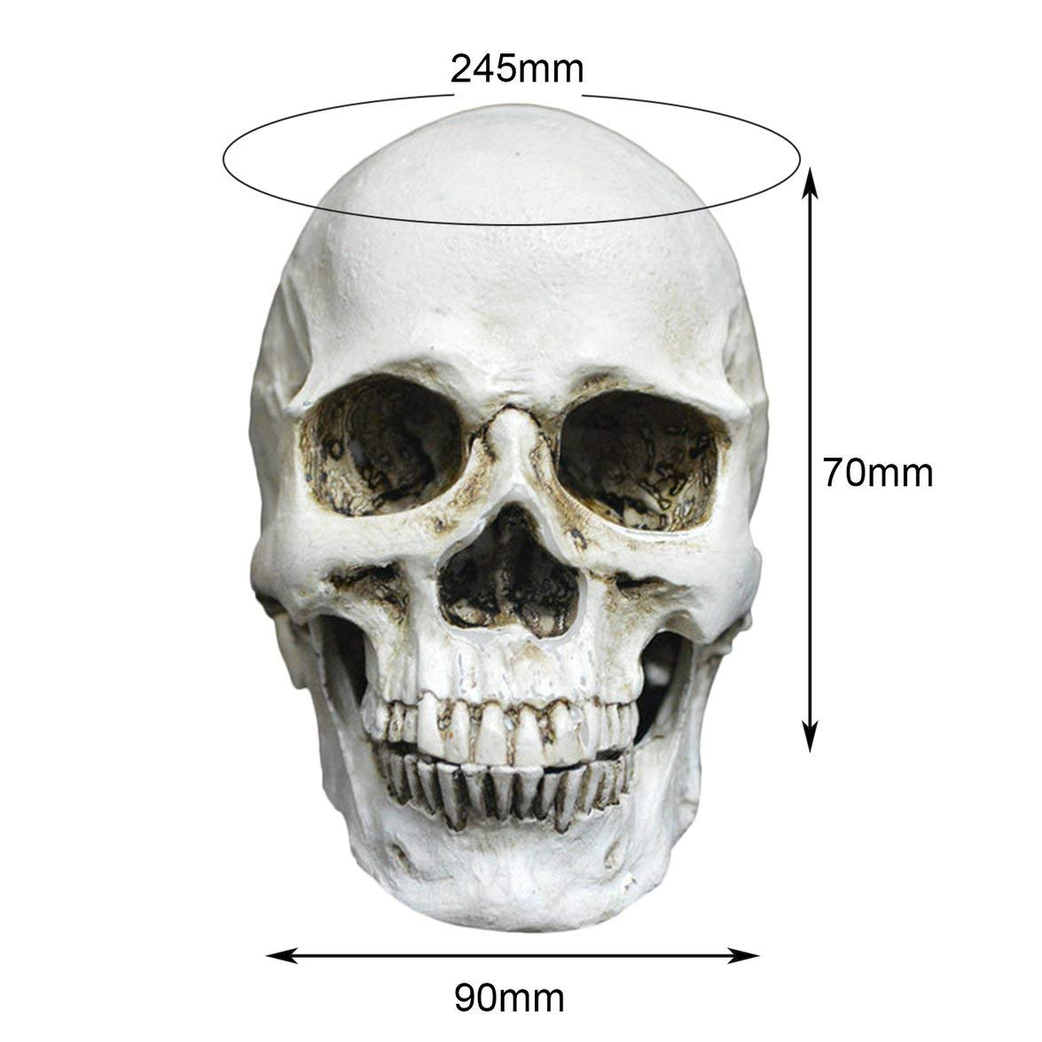 Kongqiabona Pequeño Esqueleto Decoración Creativa Modelo ...
