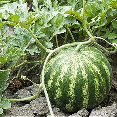 HOT - Sugar Baby, Watermelon Seeds, Watermelon, Sweet Watermelon, Vegetable Seeds, Fruit Seeds, Seeds, Seed Packets, Gardening, Garden Seeds - Crimson Sweet : Garden & Outdoor