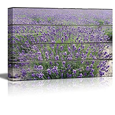 Gorgeous Portrait, Purple Lavender Field on Vintage Wood Textured Background Rustic Country Style, That You Will Love