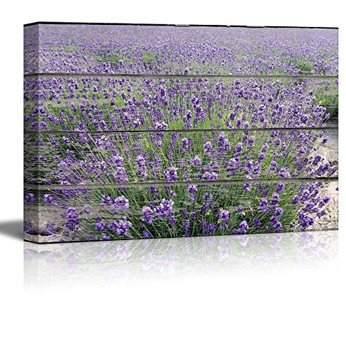 Purple Lavender Field on Vintage Wood Textured Background Rustic Country Style Gallery