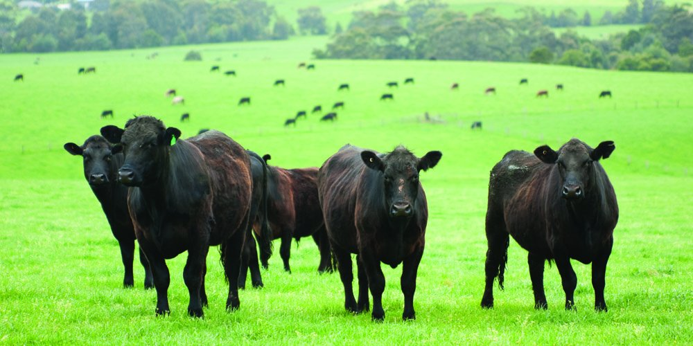 Nature's Seed PB-MWBC-1-A 1 Acre Mid-West/Mid-Atlantic Beef Cattle Pasture Blend