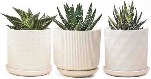 Chive Virago - Maceta de arcilla para suculentas y cactus, redonda ...