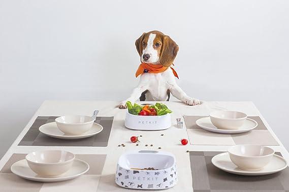 PETKIT P003 Smart Antibacteriano napf Fresh, Blanco: Amazon.es: Productos para mascotas