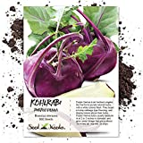 Seed Needs, Purple Vienna Kohlrabi (Brassica oleracea) 500 Seeds Non-GMO