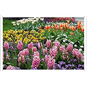 "Flower Tin Sign Hyacinths Tulips Pansies Flowers Flowerbed Park 30181 by Waller's Decor (7.8""x11.8"") 13"