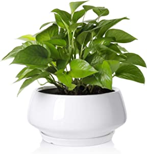 Greenaholics Large Plant Pot - 8.8Inch Round Ceramic Planter with Saucer for Scindapsus Aureum and Ivy Vine, with Drainage Hole, White