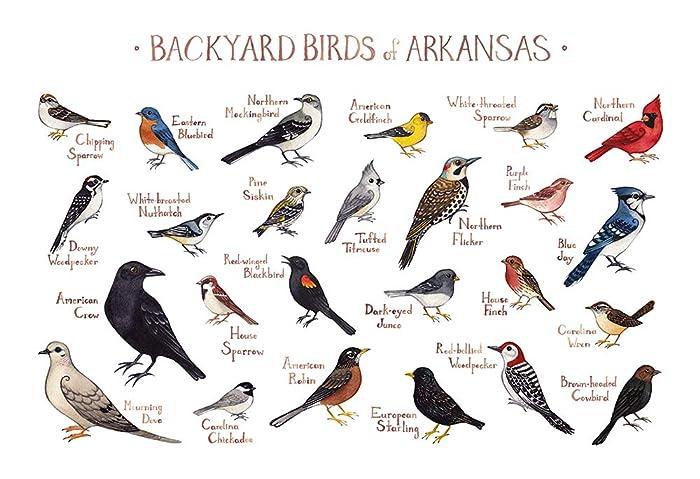 Birds of arkansas field guide by stan tekiela (english) paperback.