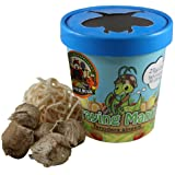 Praying Mantis (5) Egg Cases with Habitat Cup- 5 Egg Cases & 1,500 Live Ladybugs