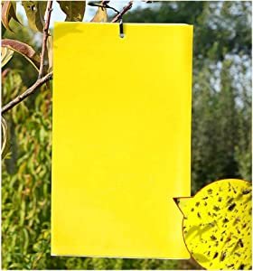 BUGTRAP Dual-Sided Sticky Insect Traps Yellow Non-Toxic for Flying Plant Pest Like Whiteflies, Fungus Gnats, Aphids, Leafminers, Thrips, ECO Friendly Materials 20-Pack (6x8 Inches)