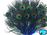 10 Pieces - ROYAL BLUE MINI Natural Peacock Tail Body feathers with Eyes