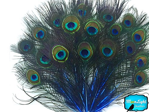 10 Pieces - ROYAL BLUE MINI Natural Peacock Tail Body feathers with Eyes - Male Peacock