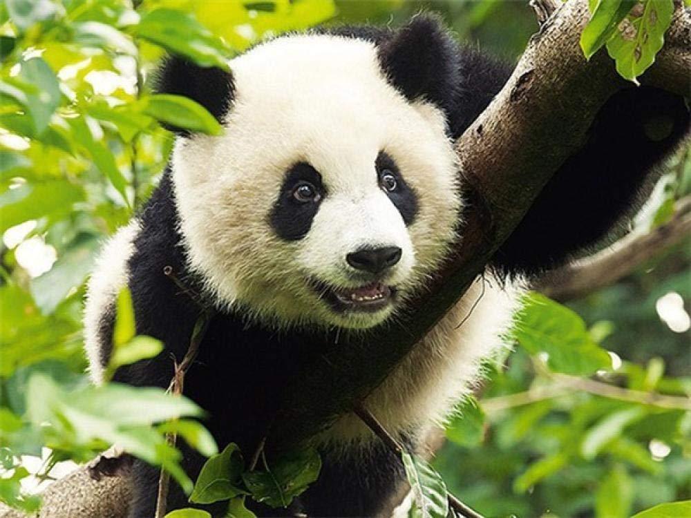 5D Diy Bordado Panda Diamante Pintura Animal Decoración Del Hogar ...