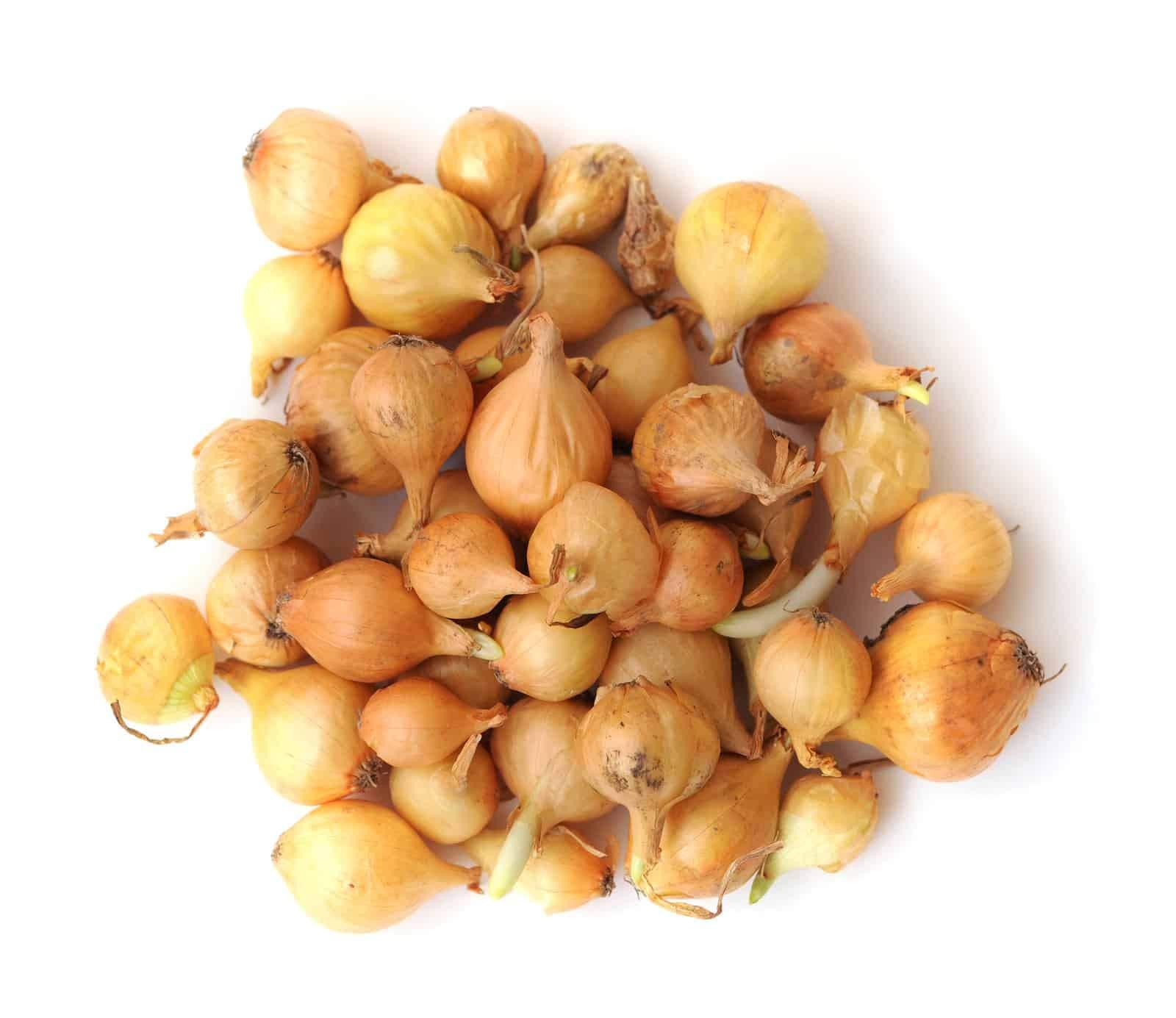 Yelow Onion Sets (100 Bulbs) Garden Vegetable