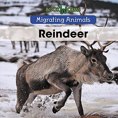 Reindeer (Migrating Animals)