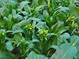 Choy Sum, Choi Sum, Yu Choy, Chinese Flowering Cabbage seeds