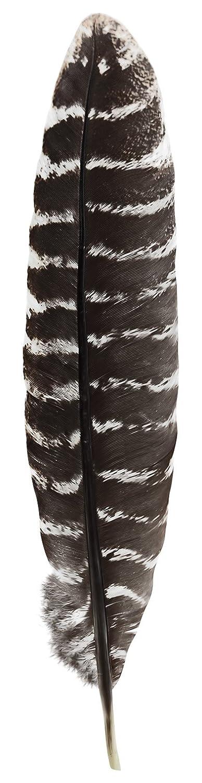 ランキング第1位 Grade A Barred Turkey Smudging Feather (no Garden stains, A cuts, Feather pieces missing) by Incense Garden B076PV5DRX, ワイシャツのLABORNE - ラボーネ -:279624d0 --- aemmontagens.com.br