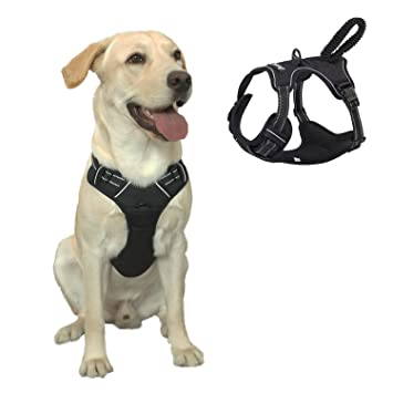Amazon.com : Dog Harness for Walking and Running Dog Chest Harness