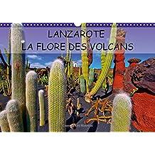 LANZAROTE LA FLORE DES VOLCANS 2016: LANZAROTE DES CHAMPS DE LAVE NATURELLEMENT FERTILES