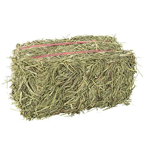 Grandpa's Best Timothy Hay Bale, 10 Lbs (50 Lb Bag Of Guinea Pig Food)