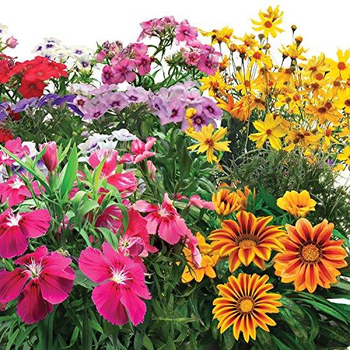 61DwXkcQXqL - Miracle-Gro AeroGarden Mountain Meadows Flower Seed Pod Kit