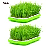 2 Sets Sprouter Tray BPA Free PP Soil-Free Densely Small Hole Healthy Wheatgrass Grower 13.4x9.84x1.77inch