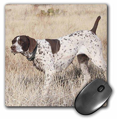 3dRose LLC 8 x 8 x 0.25 Inches German Shorthair Pointer Mouse Pad (mp_2871_1)