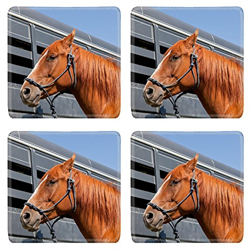 - Luxlady Square Coasters Non-Slip Natural Rubber Desk Coasters IMAGE ID: 34247959 A close up of a reddish brown horse tied with a blue rope halter to a ho